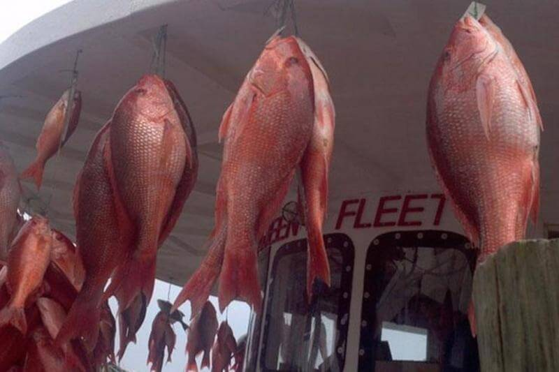 Deep Sea Fishing in the Gulf of Mexico